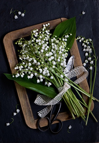 ghk-flower-meanings-lily-of-the-valley-verdina-anna